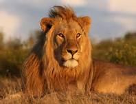 Migration Safari of Serengeti Photos