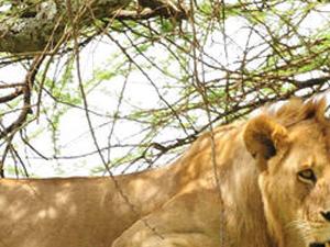 Bushmen Experience Photos