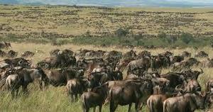 Best of Masai Mara