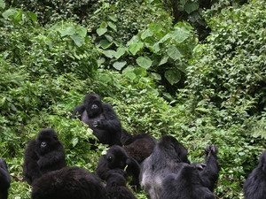 5-Day Gorillas Uganda - Rwanda Safari Package Photos