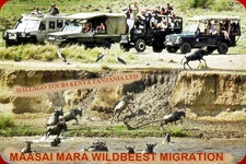 Migration 11