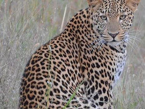 7 Days South Luangwa and Victoria Falls Fotos