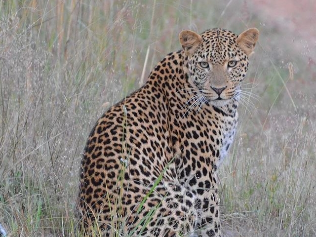 7 Days South Luangwa and Victoria Falls Photos
