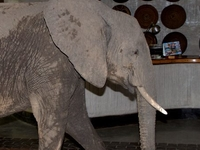 4 Days South Luangwa National Park - Luxury Safari