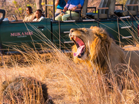 7 Days Exciting Kafue and South Luangwa Safari