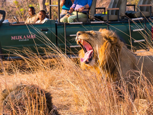 7 Days Exciting Kafue and South Luangwa Safari Photos