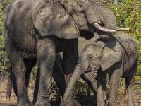 8 Days Photography Safari South Luangwa National Park, Zambia