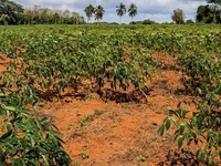 Plantation Field On Zanzibar 2000 0