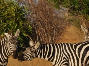 Tsavo East National Park Safari Fotos