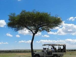 3 Days Safari Kenya Tsavo East and Ziwani Photos