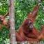 Sumatra Treks