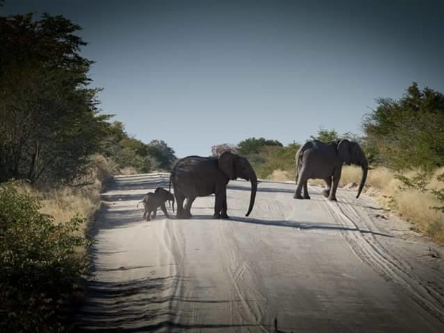 Maun to Vicfalls Tour Photos
