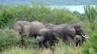 Gorillas Safaris