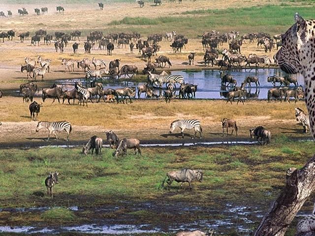 8 Days Northern Circuit - Tanzania Photos