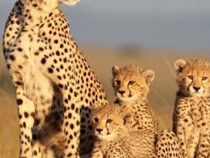 Maasai Mara Safari Photos