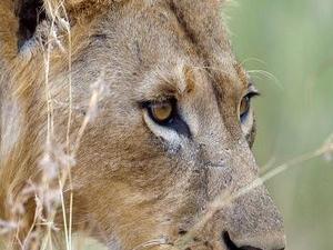 Kenya Safari Tour & Holiday Package Fotos