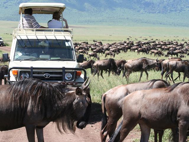 Safari - Serengeti National Park Photos