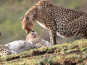 Camping Safari - Tanzania Photos