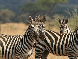 Serengeti Safari Family Holiday Photos