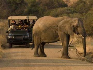 Ultimate Pilanesberg Open Vehicle Day Tours Photos
