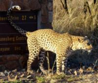 Pilanesbergsafaris