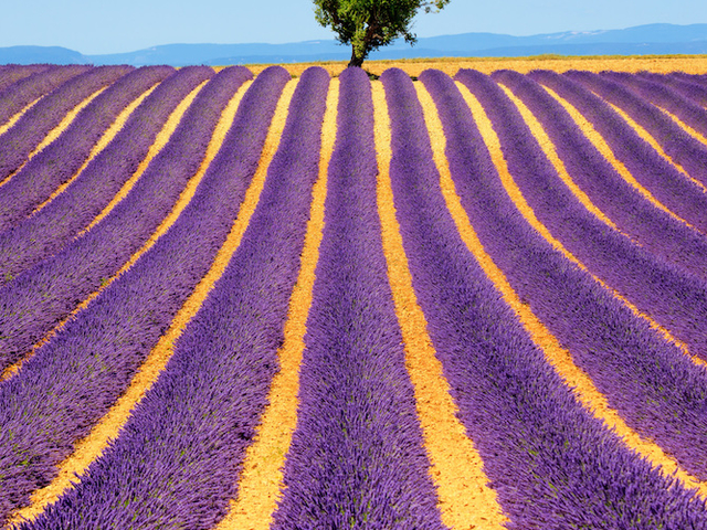 A Unique Vacation in Paris, Provence and the French Riviera Photos