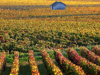 Experience a Unique Gastronomy and Wine Trip to France
