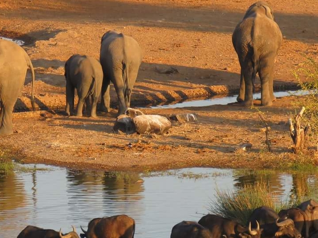 A Taste Of South Africa Plus Photos