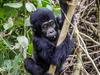 All Inclusive Safari - Gorilla Trekking