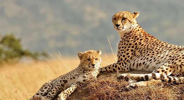 Treasures of Tanzania Safari Photos