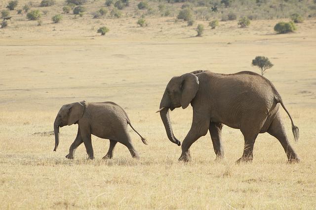 8 Days - Masai Mara Classic Safari Photos
