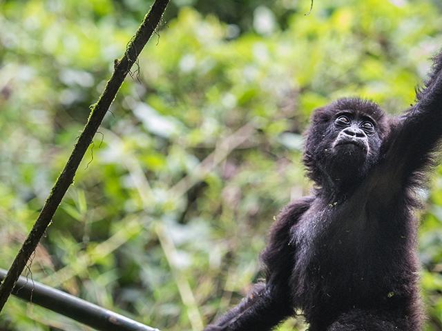 Classic Rwanda Photos