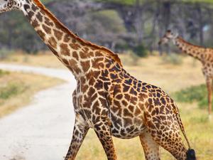 Selous Game Reserve And Zanzibar Safari Photos