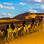 All Marrakech Tours
