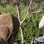 Desire Safaris