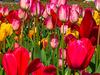 Kashmir Spring Season Holiday