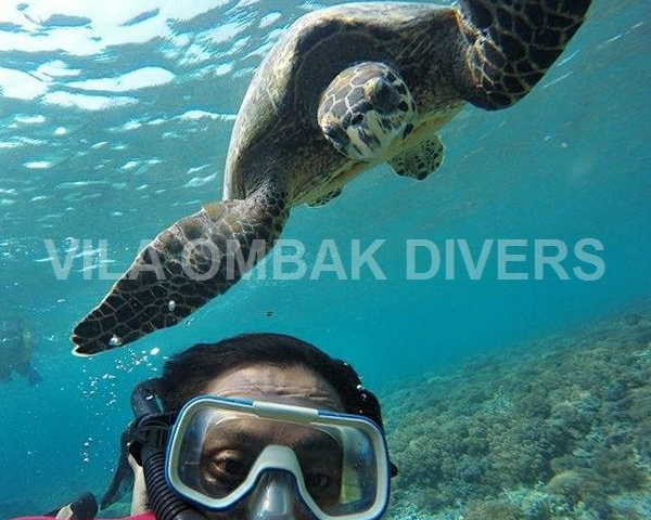 Snorkeling Trip: Private Glass Bottom Boat Around Gili Meno Photos