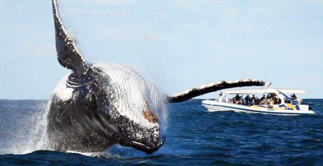 Whale Watching Tour - Mirissa Photos