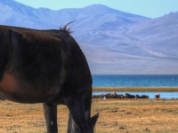 The Way of Nomad - Horseback Riding Tour