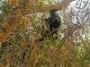Safari to Selous Game Reserve,Tanzania.