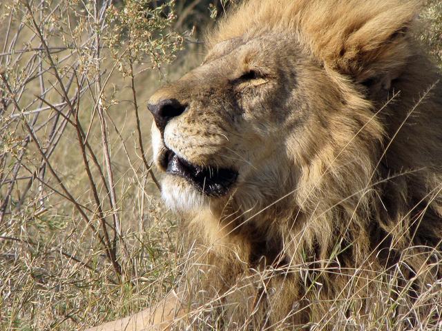 7 Days Overnight Safari in Central Kalahari Game Reserve, Botswana Photos