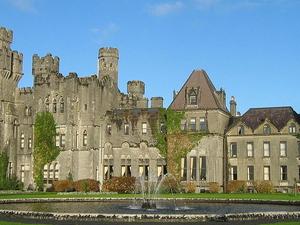 Irish Delight Fotos