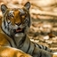 Corbett Tour & Travel