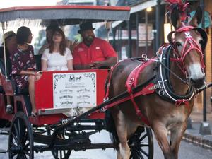 Save $$ on Carriage Tours Photos