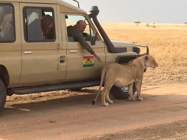 Wildlife Safaris in Northern Tanzania Photos