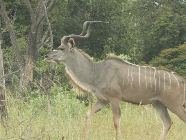 Kruger and Sabi Sand Luxury Tented Camp Safari for 5-Days Photos