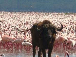 Amboseli, Hell's Gate, Lake Nakuru & Maasai Mara