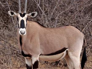 9 Day Best of Kenya Safari Fotos