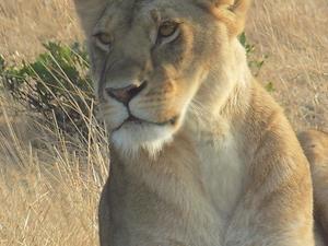 3 Days Masai Mara Safari on a Budget Fotos