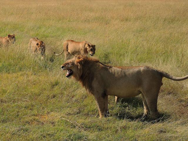 Masai Mara - Luxury Accommodation by a Hippo Pool Photos